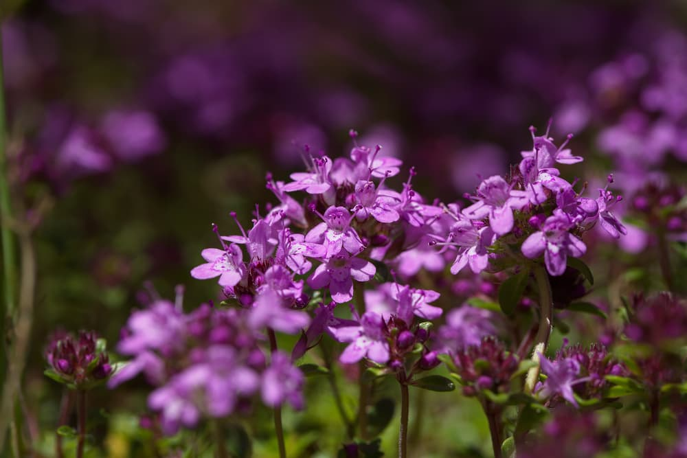 5 Plants for Your Garden This Summer